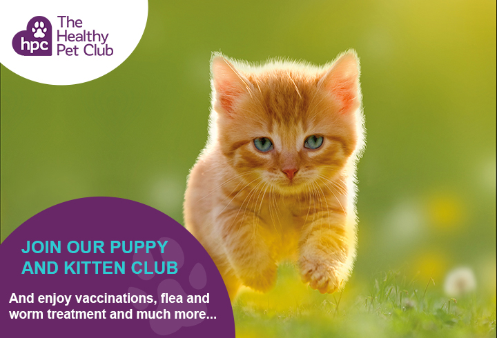 Healthy Pet Club kitten advert