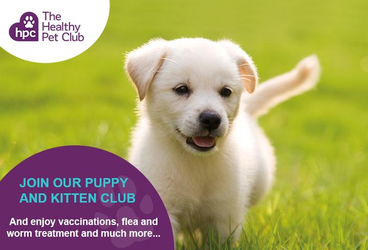 Healthy Pet Club puppies advert